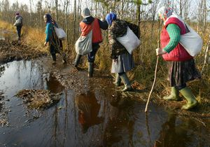 Dragonwinch мерлин-трофи в ольманских болотах