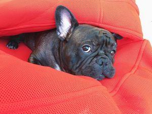 Компания аэрофлот убила собаку и как всегда открестились от ответственности