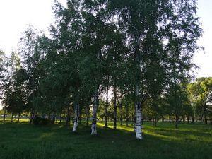 Муринский парк (вело-драйв.)