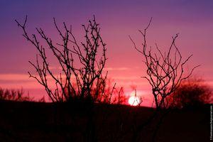 Рассвет в пустыне